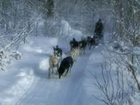 Gunflint Lodge Dog Sledding, XC & Snowshoeing
